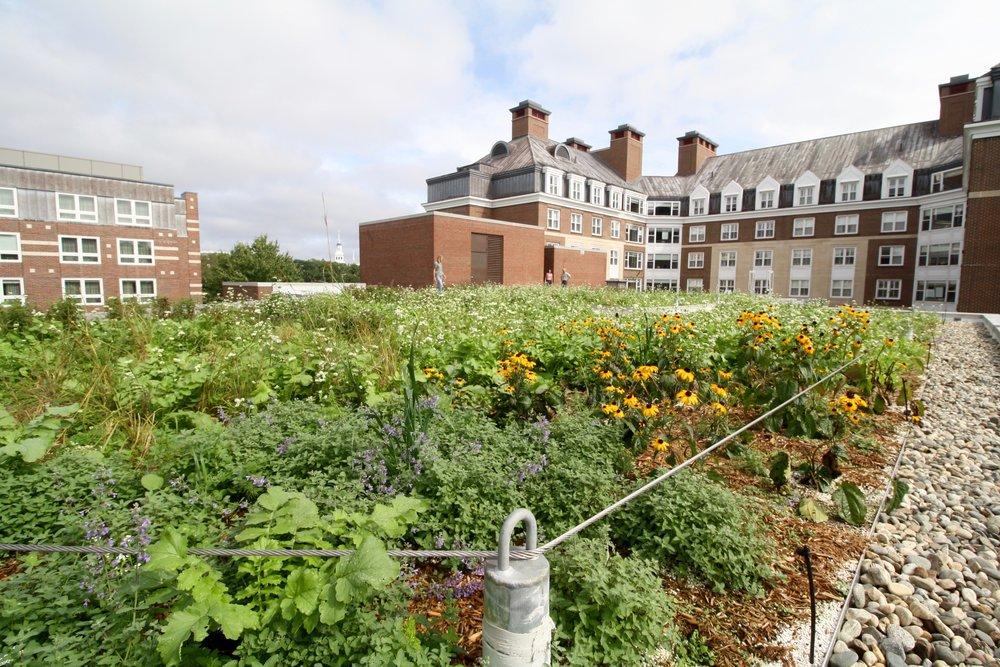 recover-green-roofs-harvar-business-school-rooftop-garden-2016-6.jpg