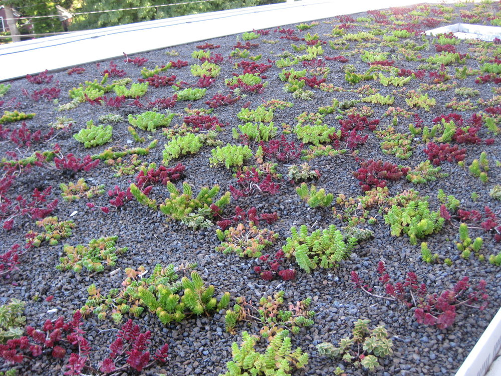 recover-green-roofs-natick-high-school-2012-3.jpg