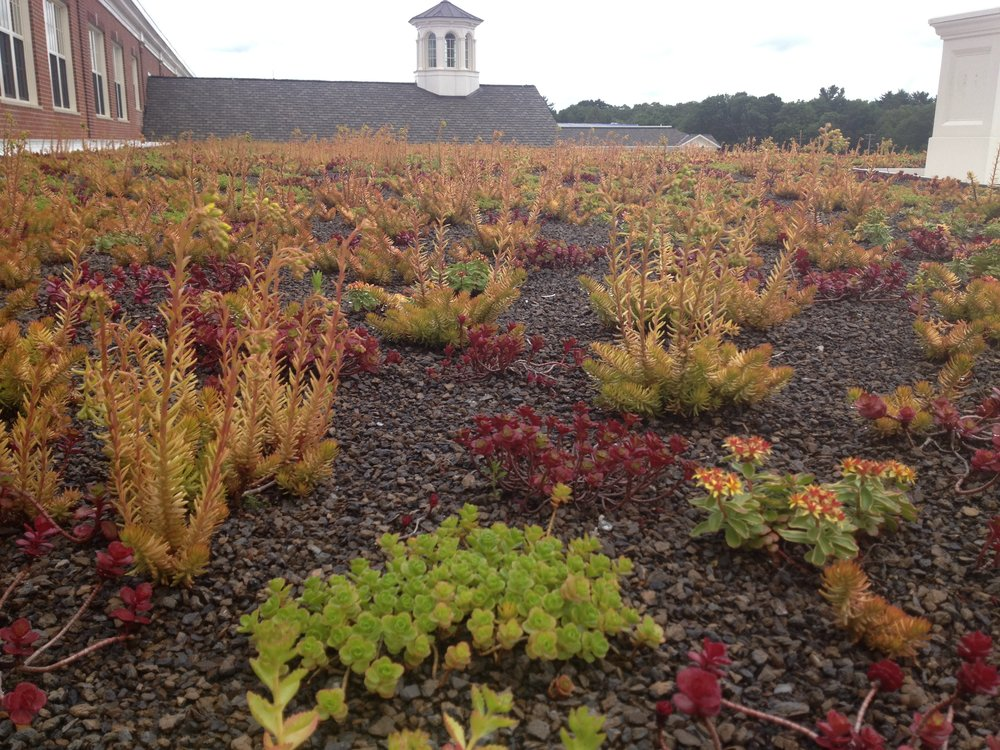 recover-green-roofs-natick-high-school-2012-2.jpg