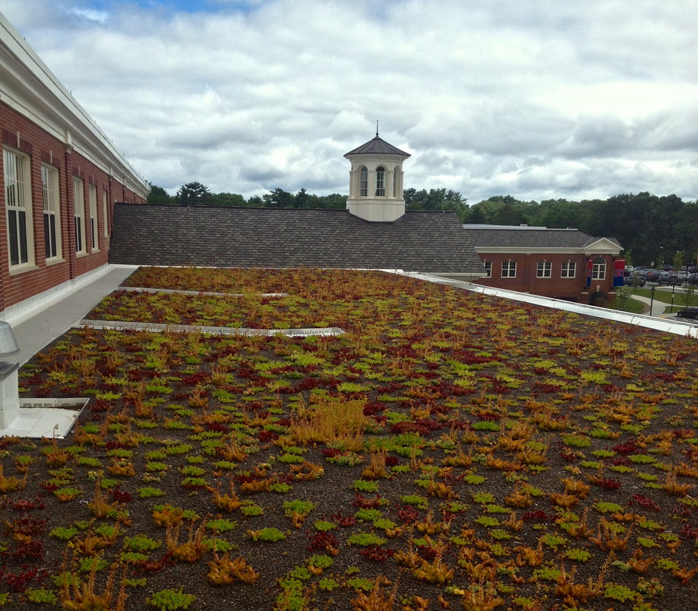 recover-green-roofs-natick-high-school-2012-5.jpg
