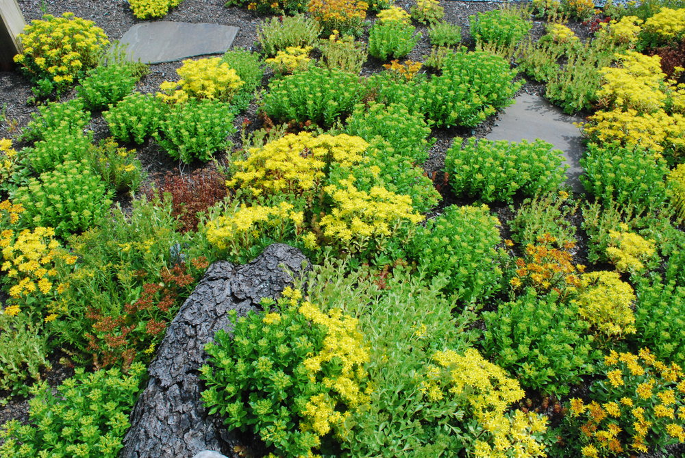 recover-green-roofs-master-balcony-vermont-2014-4.JPG