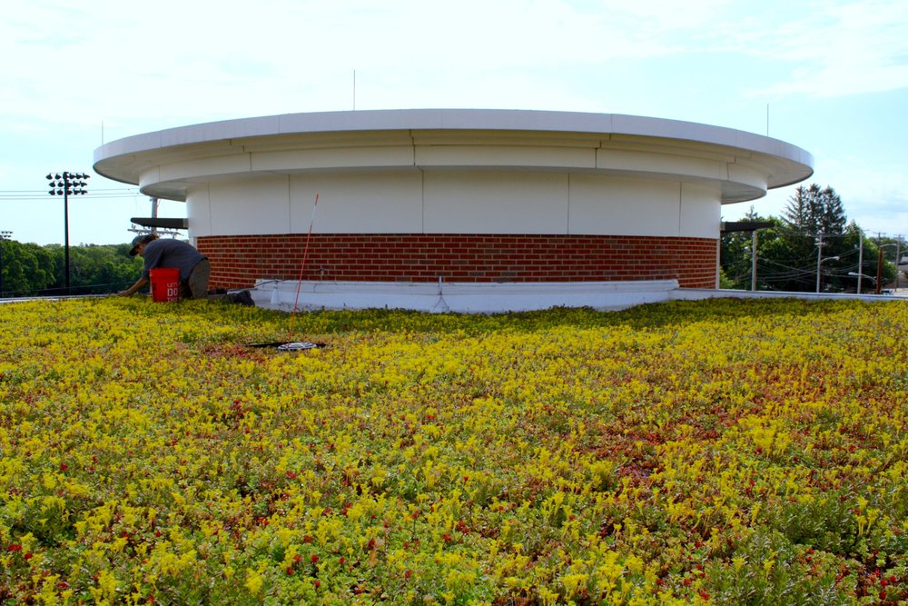 recover-green-roofs-quincy-middle-school-2013-7.jpg