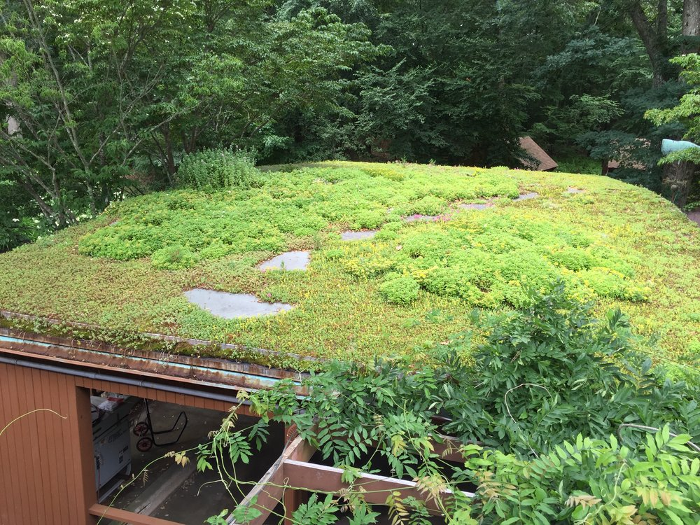 recover-green-roofs-turtle-bay-2016-2.jpg