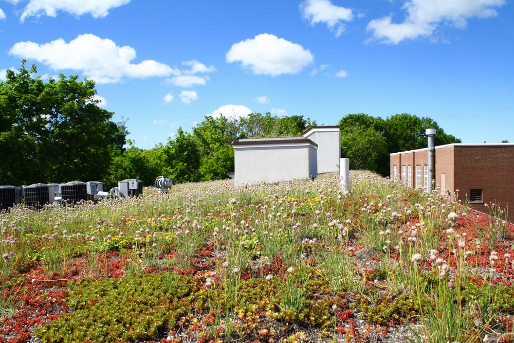 recover-green-roofs-whipple-riverview-2016-16.jpg