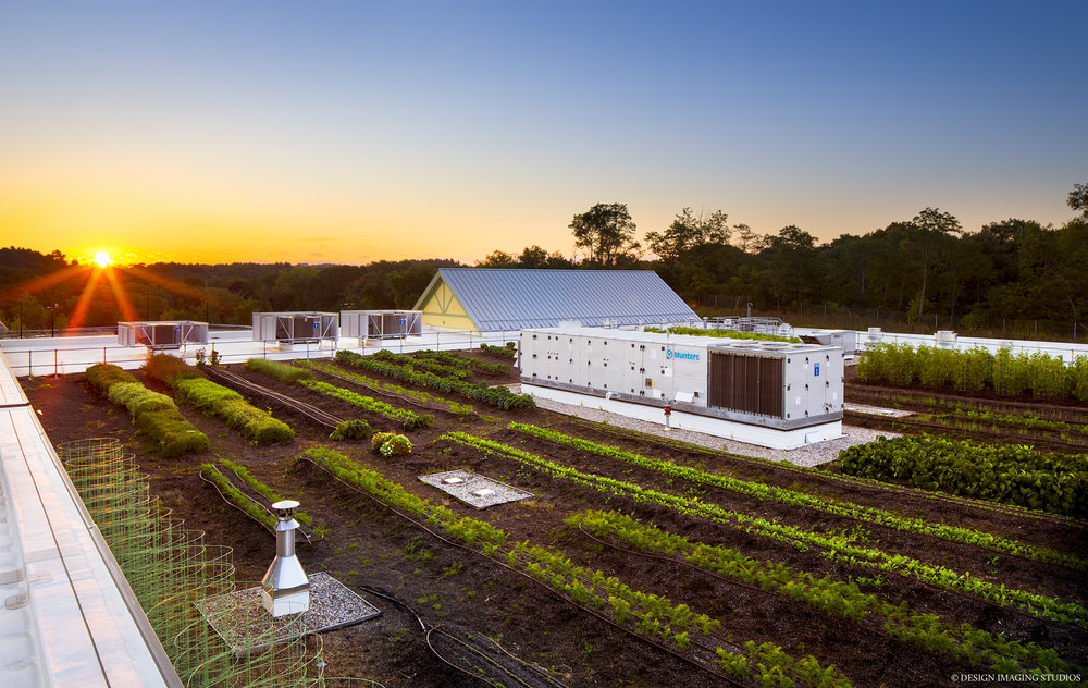 recover-green-roofs-whole-foods-market-farm-2016-1.jpg