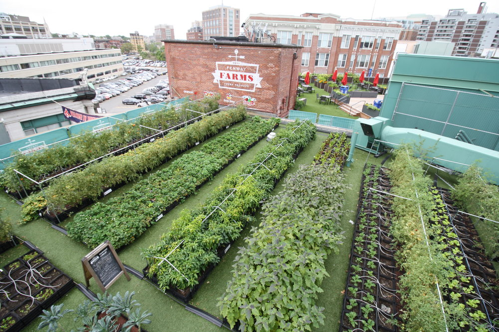 recover-green-roofs-fenway-farms-oct-2016-9.JPG