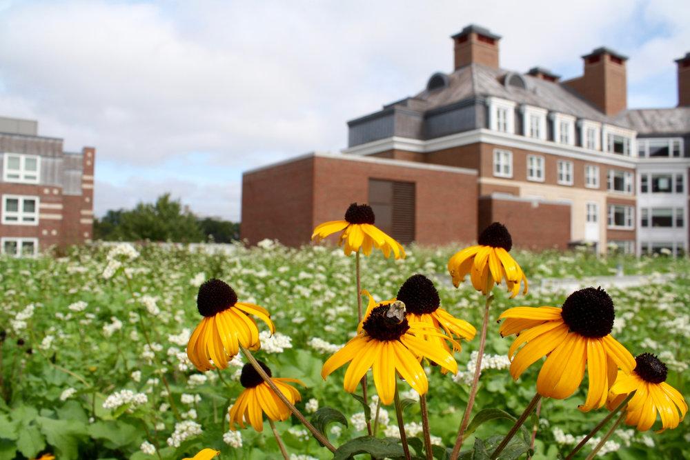 recover-green-roofs-harvard-business-school-garden-2017-15.jpg