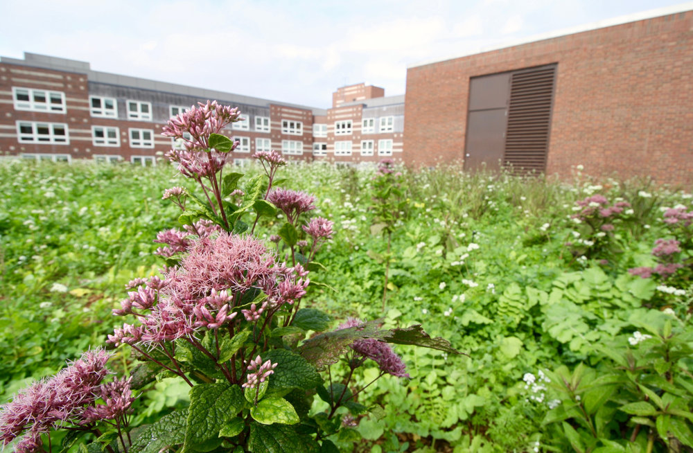 recover-green-roofs-harvard-business-school-garden-2017-5.jpg