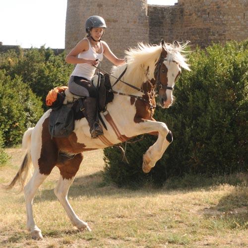 HORSE RIDING CAMP (2).jpg