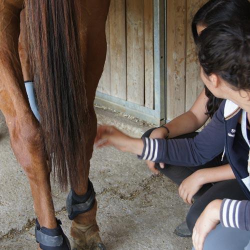 HORSE RIDING CAMP (4).jpg