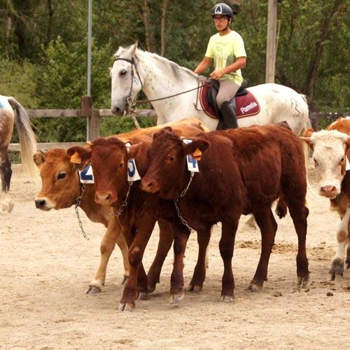 HORSE RIDING CAMP (6).jpg