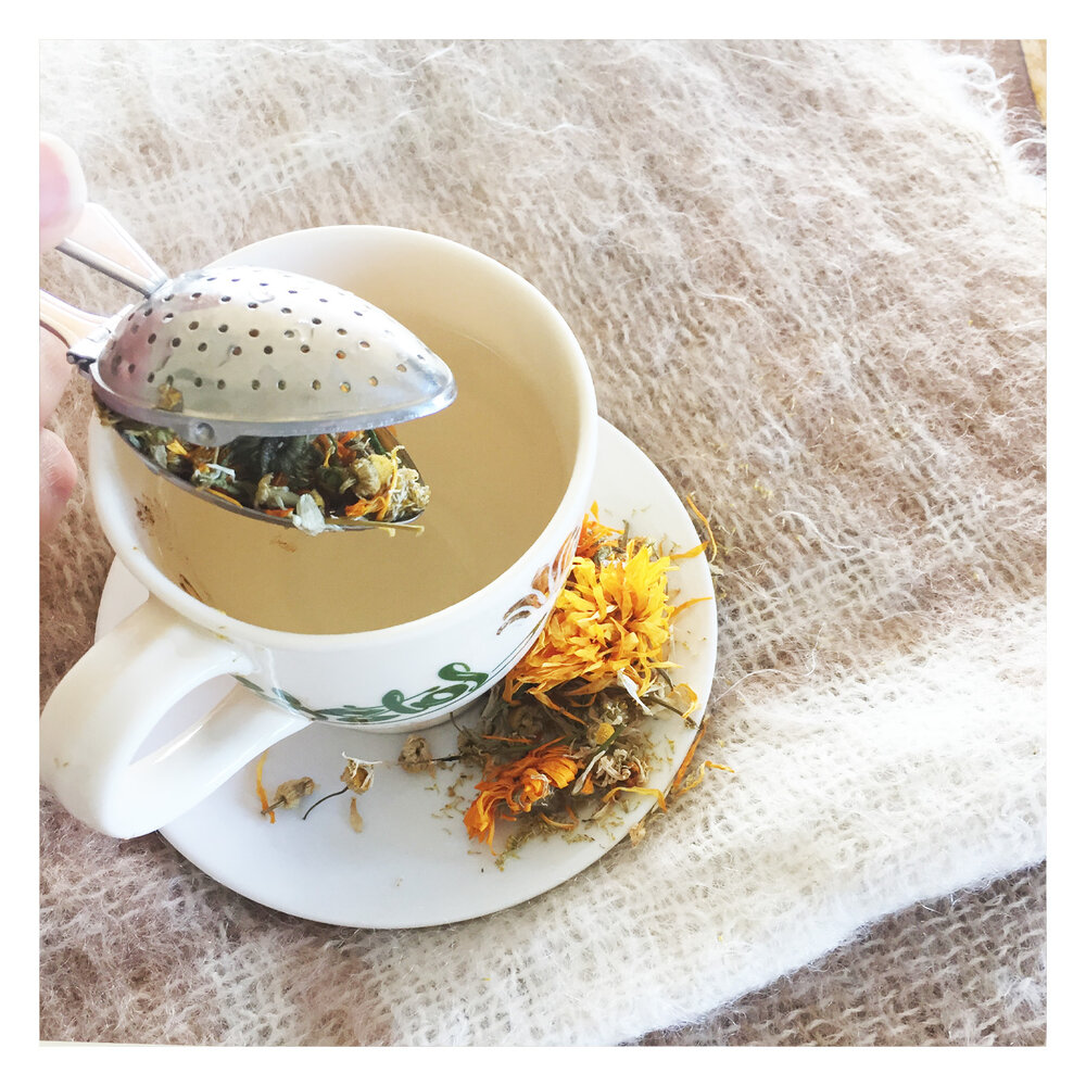 Making chamomile herbal tea
