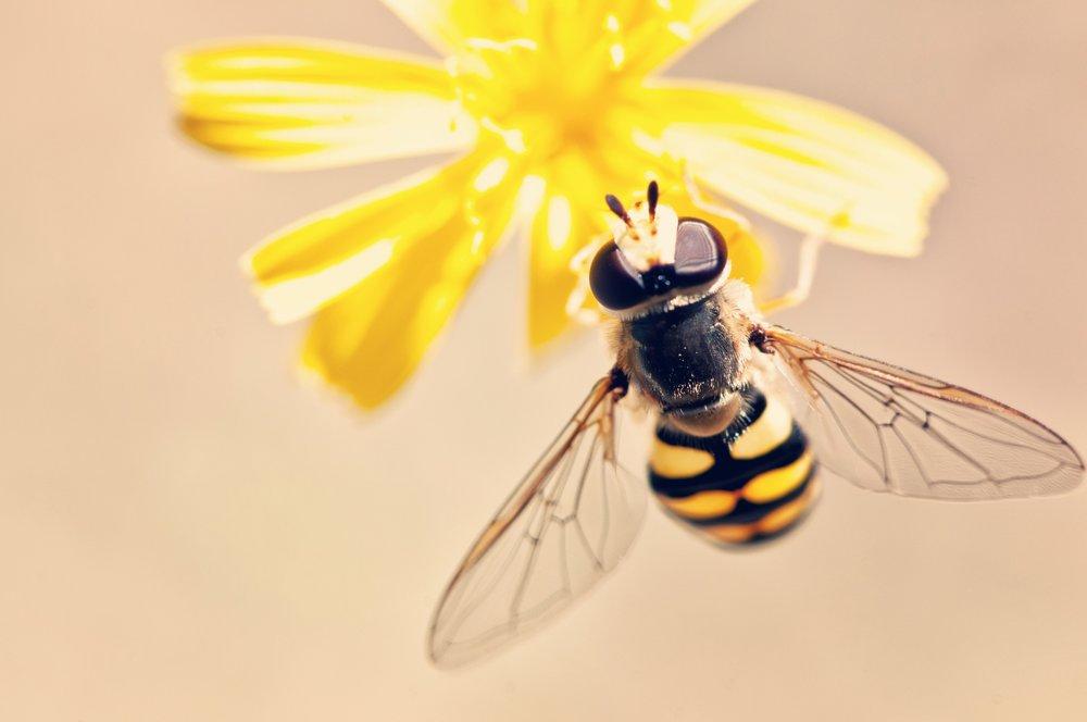 antenna-bee-bloom-395241.jpg