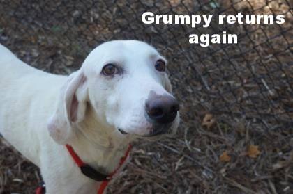 grumpy pic 3.jpg
