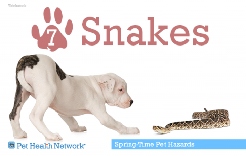 7-snakes142378568_0.png