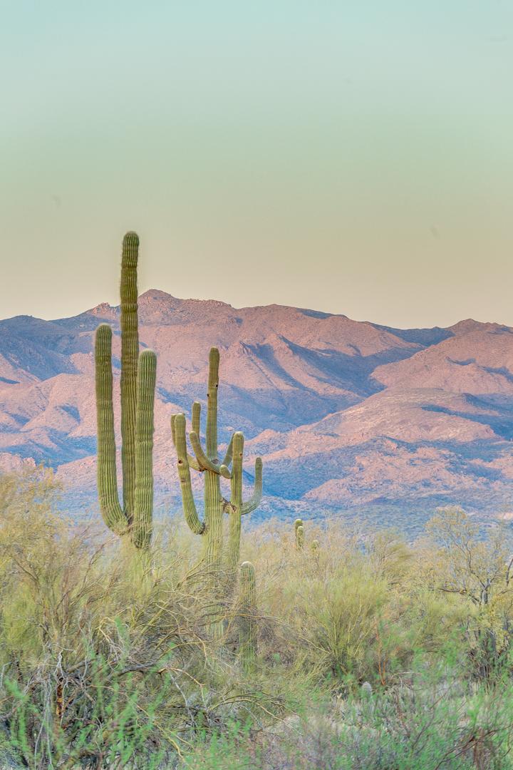 85-Desert Vista.jpg