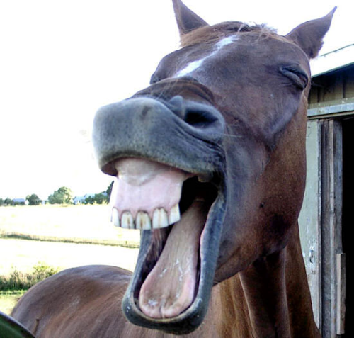 6) oh you fucked up now, girl. this is not even a rug, it is a horse making a funny face. you feel scared and alone.