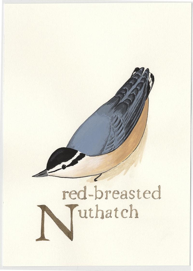 Bird-alphabet-N.jpg