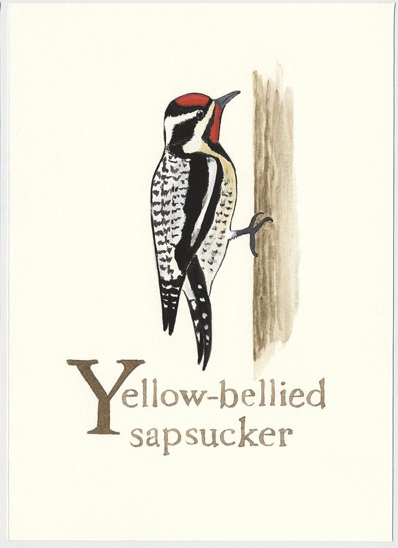 Bird-alphabet-Y.jpg