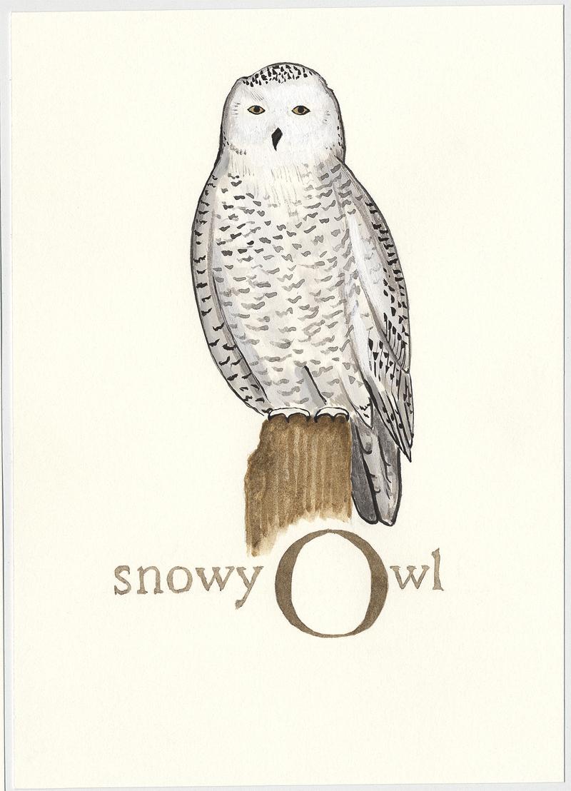 Bird-alphabet-O.jpg