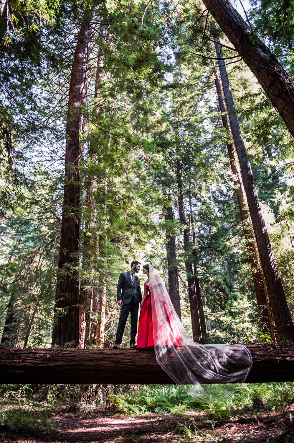 mendocino_redweddingdress_redwoods_trees_couple