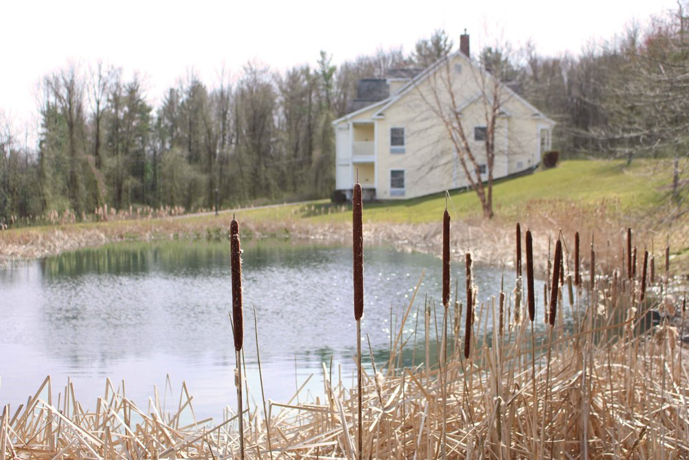 Copy of Lakeside on 12 acres