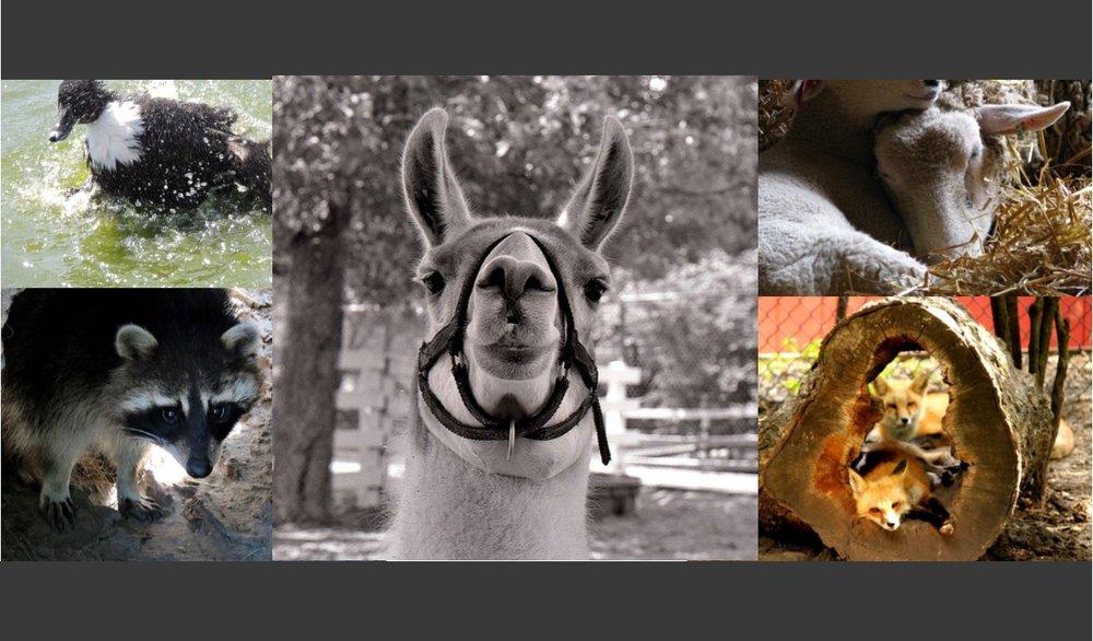 cosley zoo image.jpg