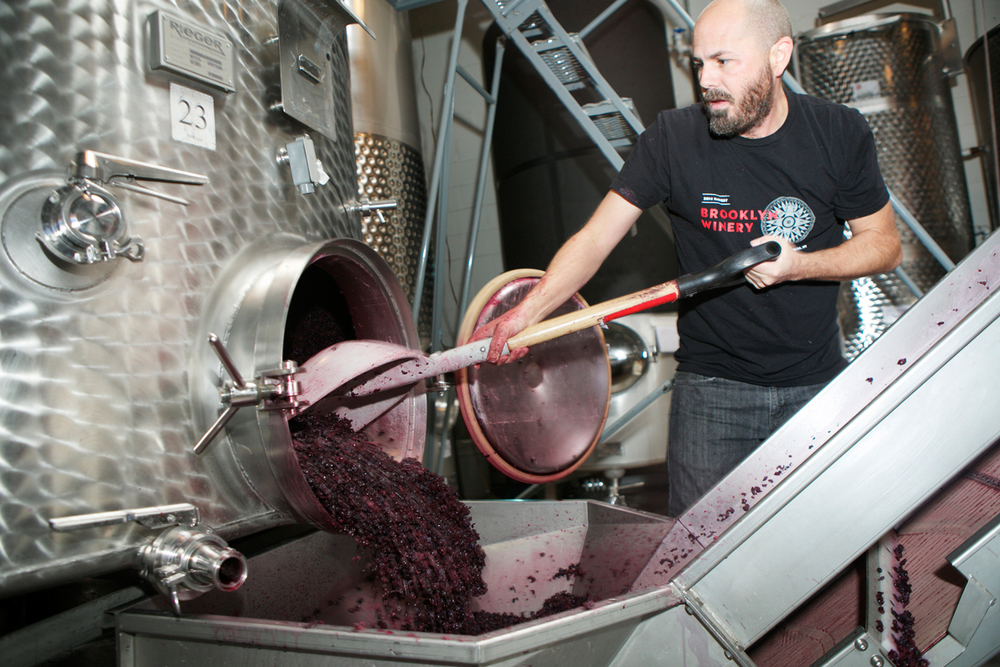 Winemaker Conor McCormack moving grapes to the wine press.