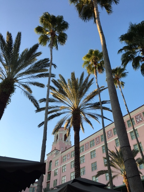 Looking up from our seats at the Vinoy. It was beautiful to see the palms against the Vinoy facade.