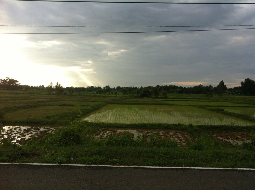 Rice Field near the Mekong River in Don Tan, Mukdahan Province