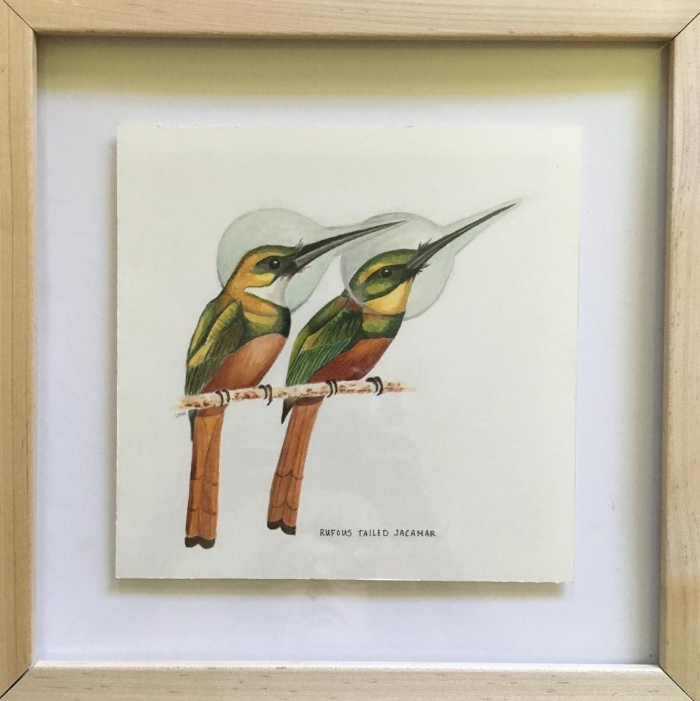 rufous tailed jacamar (framed)