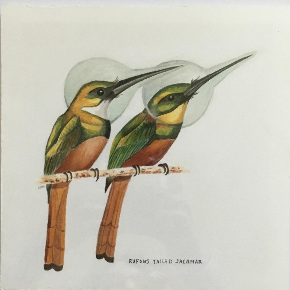 rufous tailed jacamar