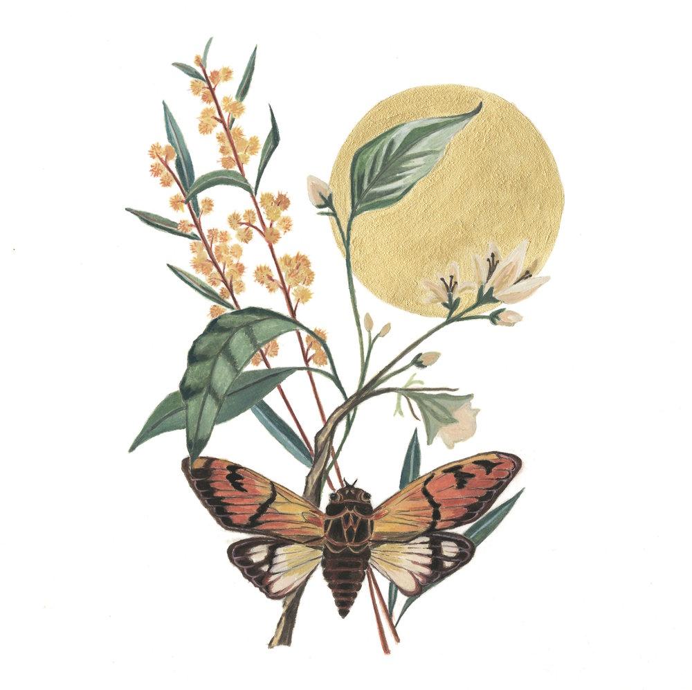 lunar cicada