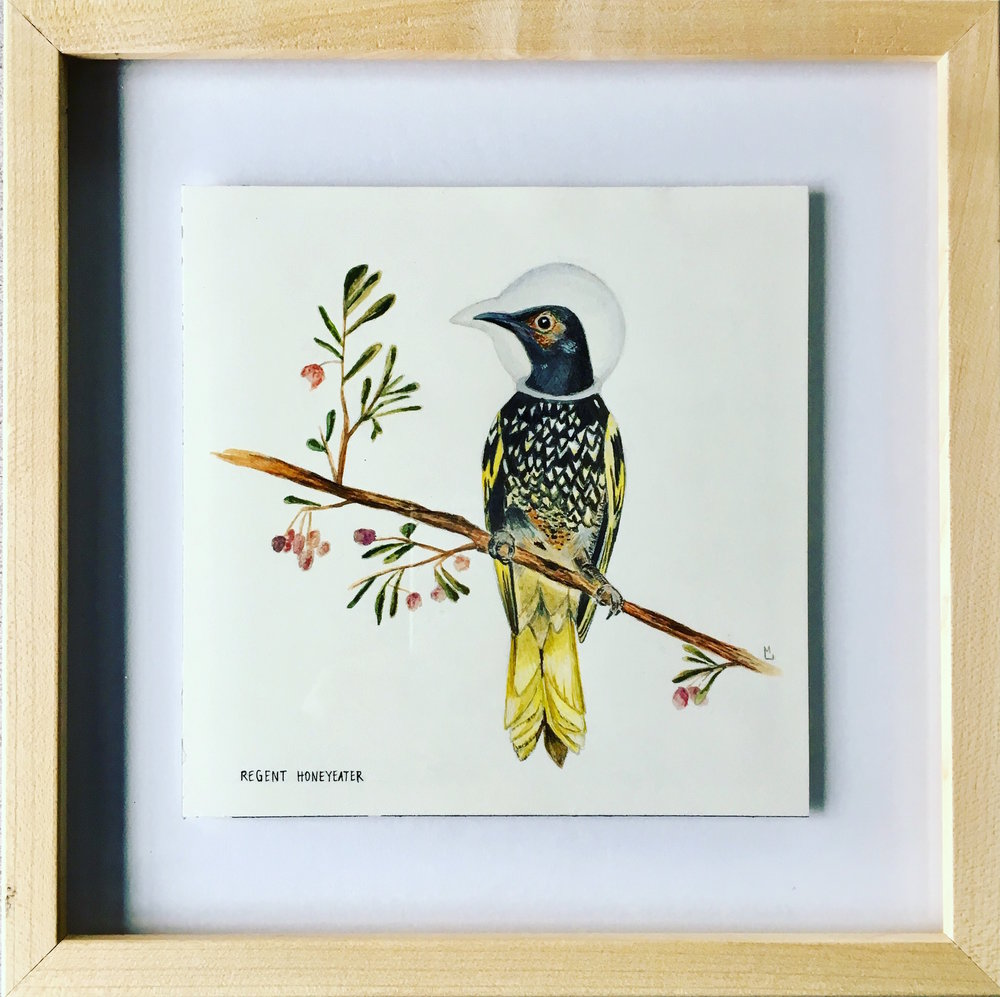 regent honeyeater (framed)
