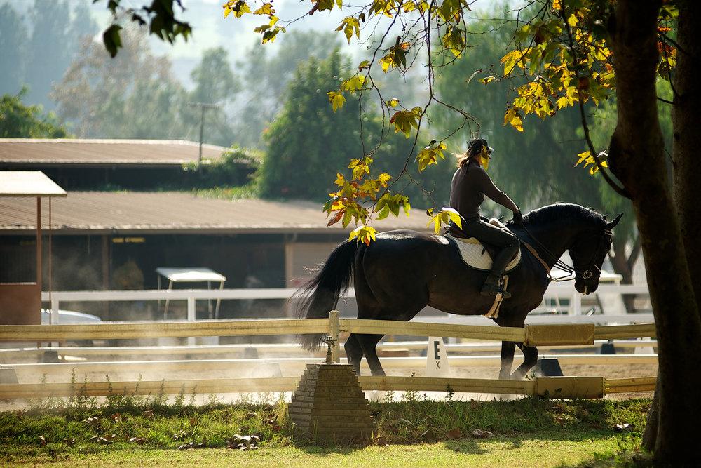 toms-horse.jpg