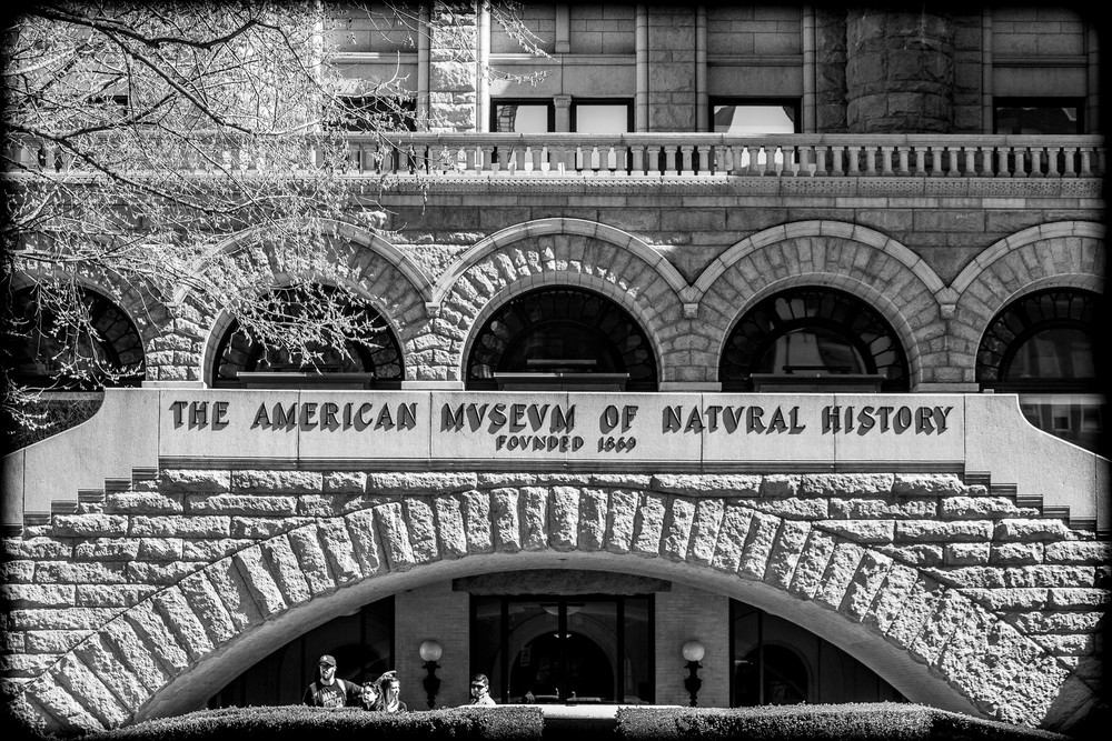 The Americe Museum of Natural History