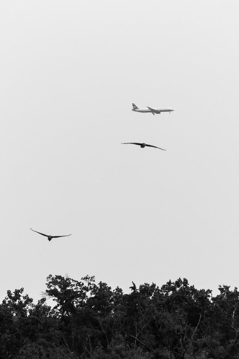 It's A Bird, It's A Plane