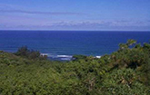 <strong>Sold for $1.85M</strong><br>Kilauea, Kauai