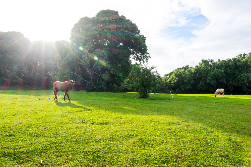 <strong>Sold for $400K</strong><br>Haena, Kauai
