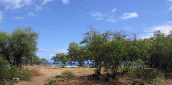 """<div align=left><span style=""""color:#13b5ea""""><strong>Kekaha, West Shore Kauai</strong><br>1.11-Acres Land<br>$995,000</span></div>"""