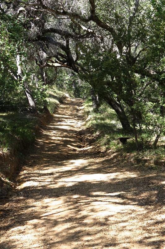 LCA Path.JPG