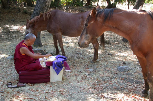Rinpoche and horses.jpg