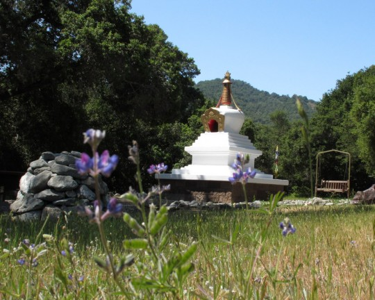 Stupa-with-Lupine-540x432.jpg