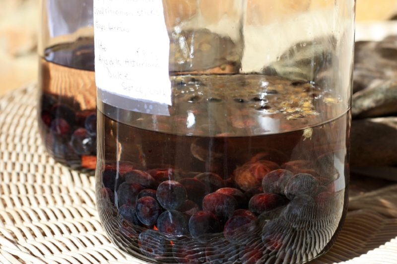 Macerating the Blackthorn/Sloe Berries.