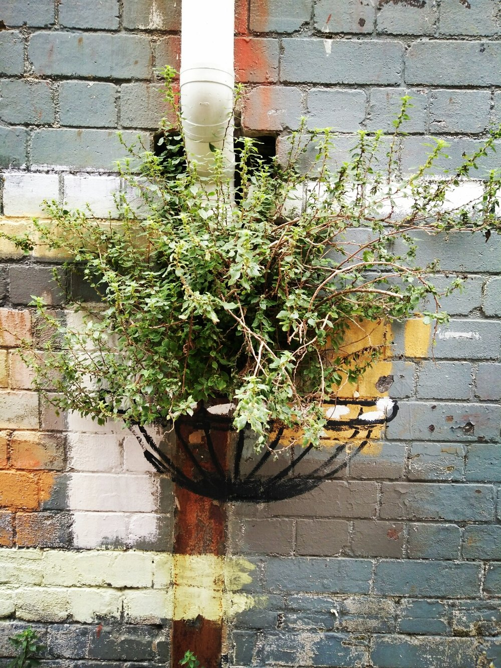 Weeds and graffiti