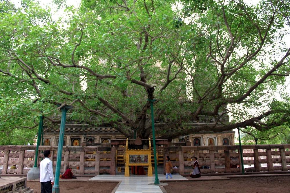 Vajrasana, Bodhi Tree at Maha Bodhi Temple
