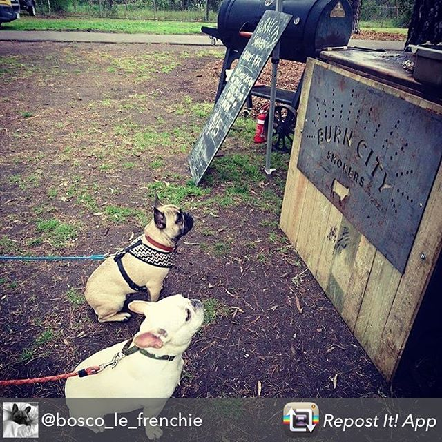 @bosco_le_frenchie knows what's good! #burncitysmokers #frenchbulldog #bbq #dogsofinsta #brisket #hankmarvinmarket #melbourne #melbournelife