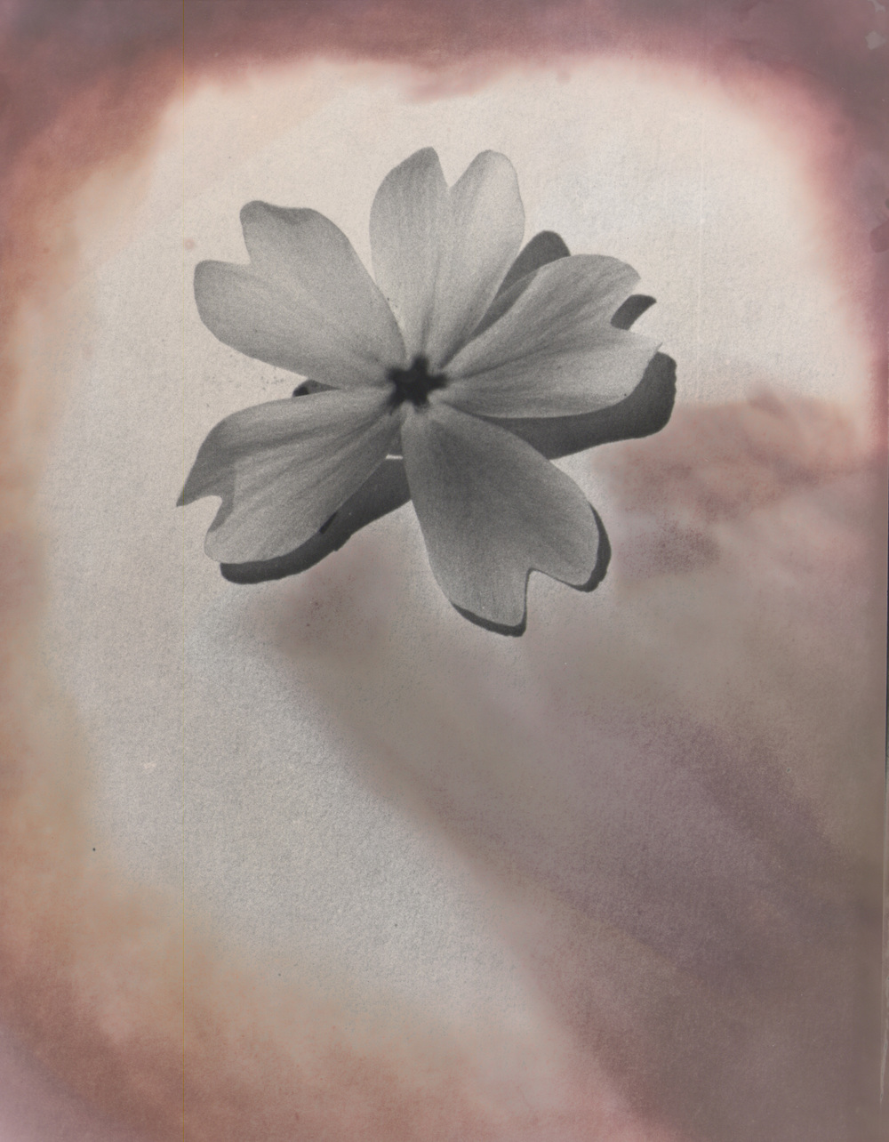 Flower Chromoskedasic