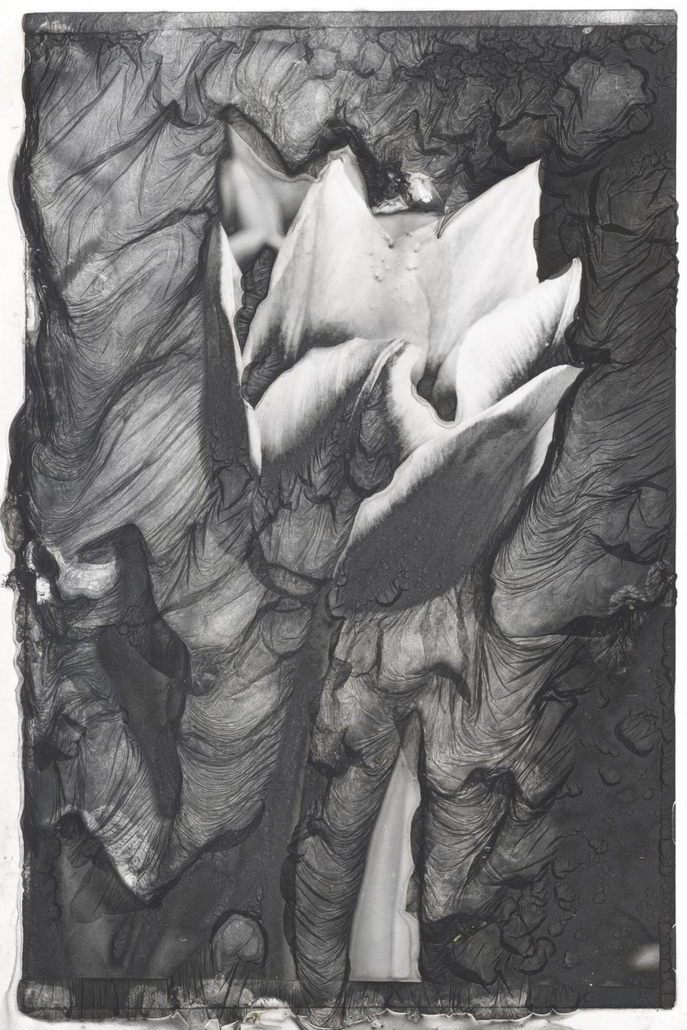 Tulip Mordincage