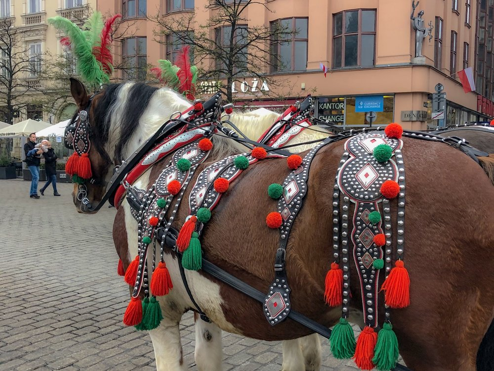 Horse & Carriage, Old Town Krakow